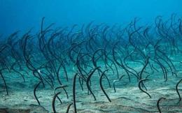 Đang bơi bỗng gặp cả một 'rừng cây' quái đản dưới đáy biển, đoàn thám hiểm thất kinh tháo chạy tan tác