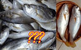 Có một loài cá ở Việt Nam từng bị chê lên chê xuống, ngày nay lại trở thành đặc sản xuất ngoại