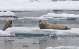 'Quái vật' vùng Bắc Cực bất ngờ trồi lên từ mặt biển, đoạt mạng hải cẩu trong chớp mắt