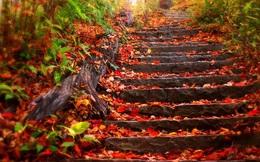 'Ngộp thở' trước vẻ đẹp của những khu rừng lá phong ở Việt Nam