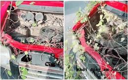 """""""Thăm"""" ô tô sau thời gian giãn cách, người đàn ông bất lực khi thấy cây dại mọc trùm từ trong ra ngoài"""