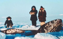 Vì ba con cá voi xám, Liên Xô và Mỹ đã bắt tay hợp tác ngay trong thời kỳ Chiến tranh Lạnh