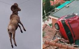 15 tình huống tai nạn khó hiểu tới mức nếu không có ảnh làm chứng sẽ bị bảo là bịa đặt