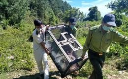 Clip: Trăn gấm quý hiếm xuất hiện ở trung tâm Đà Nẵng được thả về rừng an toàn