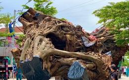 Nhiều xe hạng nặng di dời cây đa cổ thụ hơn 200 năm tuổi ở Quảng Ngãi