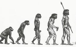 Tại sao các loài động vật khác có nhiều chi, họ, nhưng con người hiện đại lại chỉ có một?