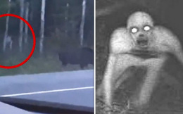 Lái xe qua 1 khu rừng, người phụ nữ vô tình ghi lại được hình ảnh sinh vật bí ẩn rình mò con nai sừng tấm