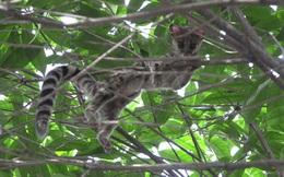 Phát hiện con vật có hình thù kỳ lạ bám trên cây, người dân vội báo cảnh sát rồi không khỏi trầm trồ khi biết được lai lịch của nó