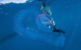 Đụng độ 'quái vật biển' to gấp đôi cá mập, thanh niên khiến người đi cùng hoảng sợ tột độ khi dám làm việc ai cũng kinh hãi!