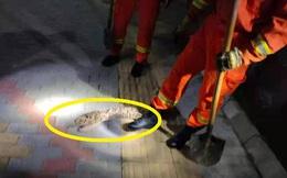 Hốt hoảng báo cảnh sát vì thấy con trăn trong bụi cỏ, đến khi tóm được con vật, tất cả đều bật cười