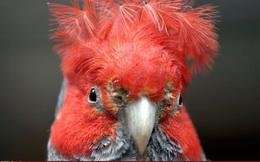 Động vật thay đổi hình dạng để ứng phó với khủng hoảng khí hậu