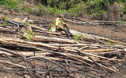 Phú Yên: Đình chỉ công tác Phó Giám đốc Ban quản lý Rừng phòng hộ Sơn Hòa