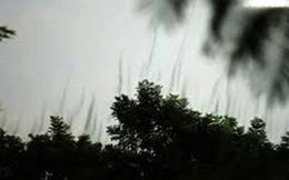 """Vì đâu cây cổ thụ ở Hàm Yên bỗng nhiên """"bốc khói"""" hình 9 con rồng?"""