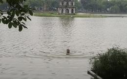 Lạ kỳ nam thanh niên bơi cùng cụ rùa Hồ Gươm
