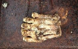 Phát hiện bàn chân đang phân hủy của dã nhân