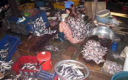 Chả cá ngon = Cá ươn, cá thối + Dầu ăn đen ngòm