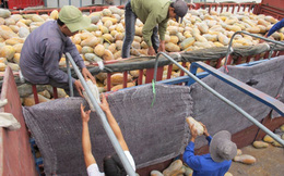 'Kêu gọi người dân không sử dụng nông sản TQ độc hại'