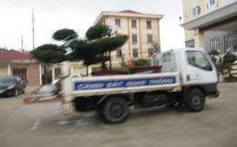 Xe CSGT chở cây xanh?