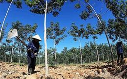 HAGL sẽ trả lời nhiều vấn đề về cáo buộc phá rừng