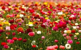 """""""Chết lặng"""" trước những thiên đường hoa mùa hè lãng mạn"""