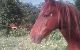 Chú ngựa thoát chết dù bị mũi tên xuyên qua đầu