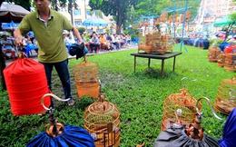 Người Sài Gòn đến công viên đọ... chim quý