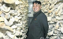 Kim Jong-un sẽ đưa Triều Tiên thành 'vương quốc nấm'