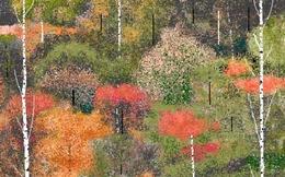 Những bức vẽ tuyệt vời bằng Paint khó tin của cụ già 97 tuổi