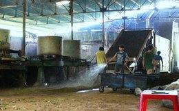 Công nghệ chế biến trà bẩn tại Lâm Đồng