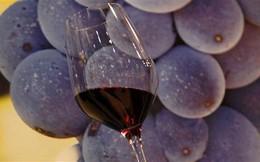 Thể dục vô tác dụng với nam giới do rượu vang đỏ