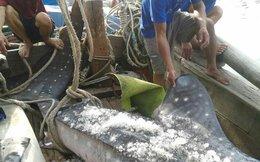 Cận cảnh cá mập khổng lồ vừa mắc lưới ở Nghệ An
