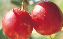 10 công dụng kỳ diệu của trái nam việt quất