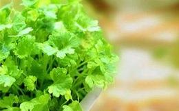 Thường xuyên ăn ngò rí giảm thiểu lượng cholesterol xấu