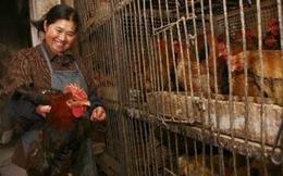 Việt Nam họp khẩn để ứng phó dịch cúm A/H7N9