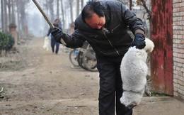 Hình ảnh cáo trắng bị lột da dã man ở Trung Quốc