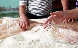 Cơm nếp biến thành gạo sau 5 ngày ủ men