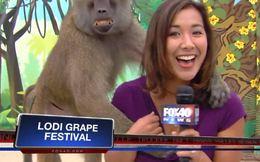 """Sờ ngực MC truyền hình, khỉ cười """"nhăn nhở"""""""