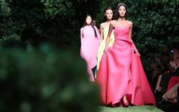 """""""Le Jardin"""": âm thanh sống động của màu sắc"""
