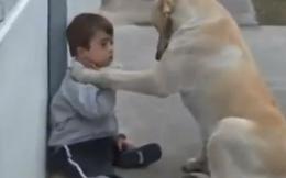 Xúc động với clip chú chó an ủi cậu bé thiểu năng