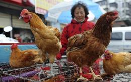 4 tình huống dập tắt dịch cúm A/H7N9 ở Việt Nam