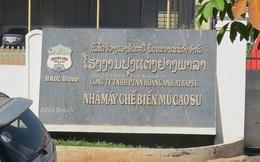 HAGL có nhận gỗ của chính phủ Lào trừ nợ hay không?