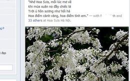 Mùa Hoa sưa, mùa kỉ niệm