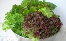 Bất ngờ công dụng cải thiện khả năng sinh sản của rau diếp