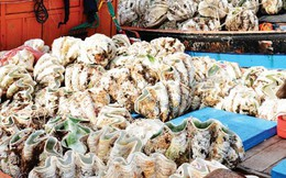 40 triệu đồng/con sò trong Sách đỏ