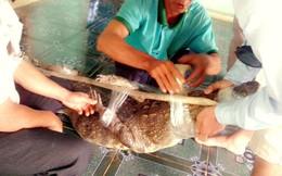 Vây lưới bắt cá sấu dài 2m lạc vào ao nhà dân