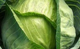Bài thuốc dân gian phương Tây giảm đau bằng bắp cải rất hiệu quả