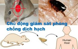 """Bộ Y tế cảnh báo về """"cái chết đen"""" bắt nguồn từ chuột"""