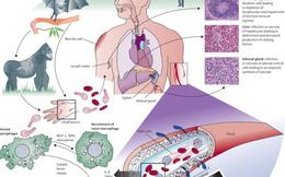 Các triệu chứng bệnh Ebola và cách điều trị khi mắc bệnh