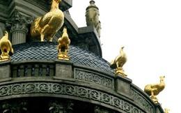 Lâu đài gà dát vàng của đại gia Cầu Giấy: Gà bới trên đầu sẽ loạn