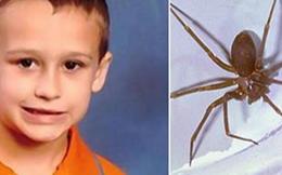 Xót xa bé trai 5 tuổi thiệt mạng vì bị nhện cắn tại nhà